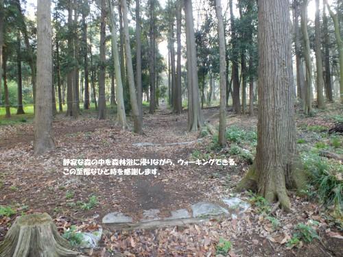 森林浴 その2