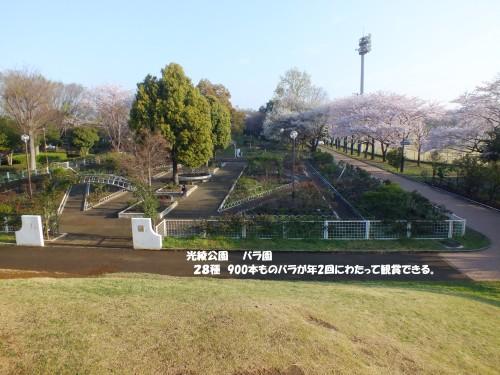 光綾公園 ばら園